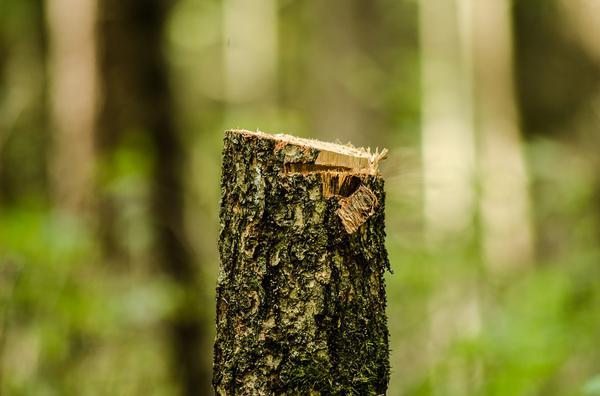 profesjonalna wycinka drzew - Bydgoszcz